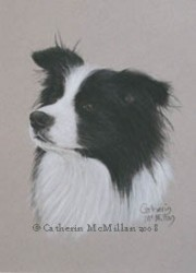 Animal Art House Pet Portraits