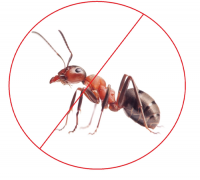 Ant Control Canberra Canberra Pest Control
